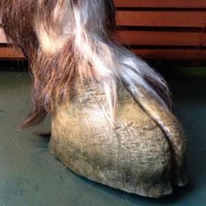 Hoof Shoe